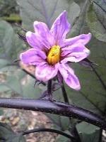 梅雨の花々