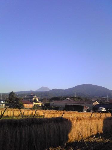 稲刈りと富士山